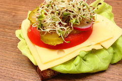 Vegetarian sandwich with alfalfa and radish sprouts Royalty Free Stock Photo