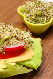 Vegetarian sandwich and bowl with alfalfa and radish sprouts Royalty Free Stock Photos