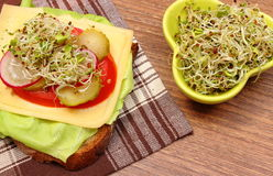 Vegetarian sandwich and bowl with alfalfa and radish sprouts Royalty Free Stock Photography