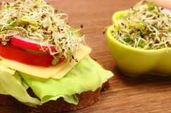 Vegetarian sandwich and bowl with alfalfa and radish sprouts Stock Photography