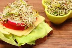 Vegetarian sandwich and bowl with alfalfa and radish sprouts Royalty Free Stock Image