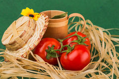 Vegetarian still life of tomato. On background Stock Image