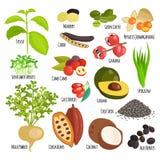 Vegetarian superfood healthy vegetable vector. Vegetarian superfood healthy and vegetable vegetarian eco food. Fresh vegetarian healthy organic. Traditional Stock Photos