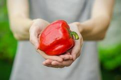 Vegetarianos y fruta y verdura fresca en la naturaleza del tema: mano humana que sostiene una pimienta roja en un fondo de GR ver Fotografía de archivo libre de regalías