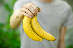 Vegetarians and fresh fruit and vegetables on the nature of the theme: human hand holding a bunch of bananas on a background of gr Royalty Free Stock Photo
