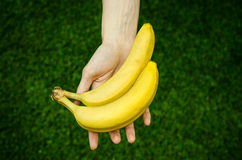 Vegetarians and fresh fruit and vegetables on the nature of the theme: human hand holding a bunch of bananas on a background of gr Stock Images