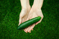 Vegetarians and fresh fruit and vegetables on the nature of the theme: human hand holding a cucumber on a background of green gras Stock Photography