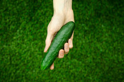 Vegetarians and fresh fruit and vegetables on the nature of the theme: human hand holding a cucumber on a background of green gras Royalty Free Stock Image