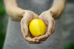 Vegetarians and fresh fruit and vegetables on the nature of the theme: human hand holding a lemon on a background of green grass Royalty Free Stock Image
