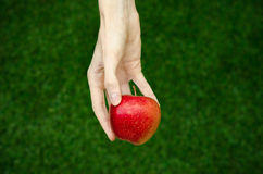 Vegetarians and fresh fruit and vegetables on the nature of the theme: human hand holding a red apple on a background of green gra Stock Photography