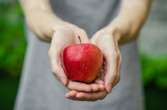 Vegetarians and fresh fruit and vegetables on the nature of the theme: human hand holding a red apple on a background of green gra Royalty Free Stock Images