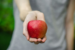 Vegetarians and fresh fruit and vegetables on the nature of the theme: human hand holding a red apple on a background of green gra Stock Images