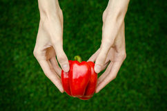 Vegetarians and fresh fruit and vegetables on the nature of the theme: human hand holding a red pepper on a background of green gr Stock Photos