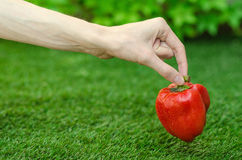 Vegetarians and fresh fruit and vegetables on the nature of the theme: human hand holding a red pepper on a background of green gr Royalty Free Stock Images