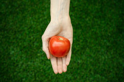 Vegetarians and fresh fruit and vegetables on the nature of the theme: human hand holding a tomato on the background of green gras Stock Photo