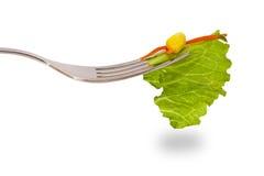 Vegetarische Diät lizenzfreie stockfotos