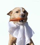 Vegetarische hond Stock Afbeeldingen