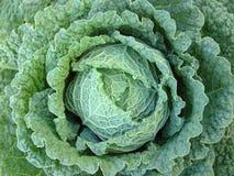 Vegetarische maaltijdkool Stock Foto