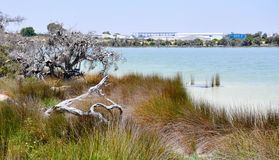 Vegetated Wetland Landscape at Lake Coogee Royalty Free Stock Photo