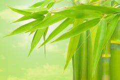 Vegetatie Royalty-vrije Stock Foto
