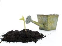 Vegetatie Stock Fotografie