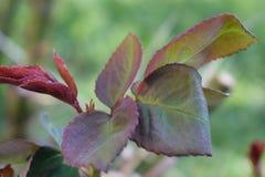 vegetatie Royalty-vrije Stock Afbeeldingen