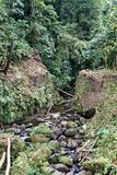 Vegetatie in de Ecologische Reserve van Cotacachi Cayapas Royalty-vrije Stock Foto