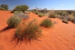 Vegetatie in de rode woestijn van Australische outhback Stock Afbeeldingen