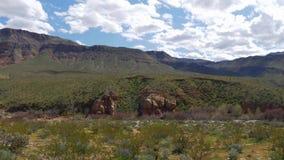 Vegetatie in de woestijn van Utah stock video