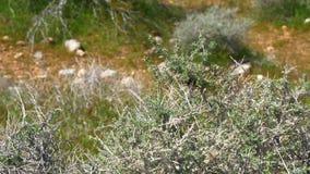 Vegetatie in de woestijn van Utah stock videobeelden