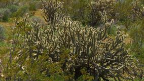 Vegetatie in de woestijn van Utah stock footage
