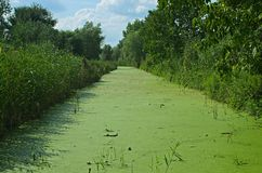 Vegetatie die bij moeras tijdens de zomertijd een hoge vlucht nemen stock fotografie