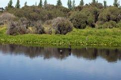Vegetatie die in lagune, Busselton, WA, Australië nadenken royalty-vrije stock foto