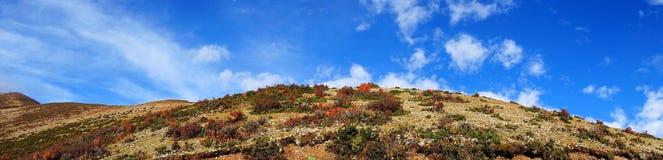 Vegetatie en blauwe hemel Royalty-vrije Stock Foto's