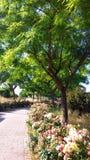 Vegetatie en bloemen in parkhoogtepunt van roze struiken stock afbeeldingen