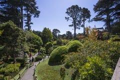 Vegetatie en bomen in een Japanse tuin Royalty-vrije Stock Fotografie