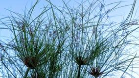 Vegetatie en hemel royalty-vrije stock foto's