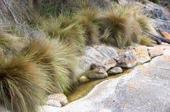 Vegetatie en rotsen, Flinders-Eiland royalty-vrije stock foto's