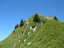 Vegetatie en sparren in de berg Stock Fotografie