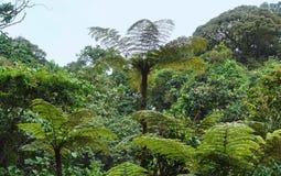 Vegetatie in het Nationale Park Bwindi Stock Foto