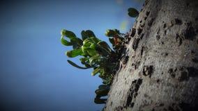 Vegetatie op Boom met Blauwe Hemel Stock Foto's