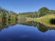 Vegetatie op de rand van een rivier in zijn water wordt weerspiegeld dat royalty-vrije stock afbeelding