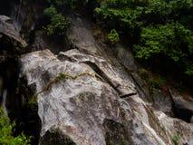 Vegetatie op naakte rots: aanpassing royalty-vrije stock afbeeldingen