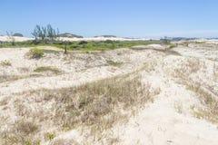 Vegetatie over duinen bij Itapeva-Park in Torres-strand stock foto