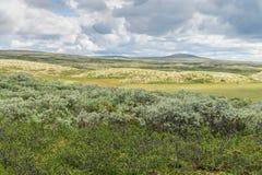 Vegetatie van de toendra in de bergen van Noorwegen surrounding royalty-vrije stock foto