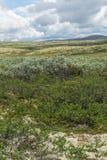 Vegetatie van de toendra in de bergen van Noorwegen surrounding royalty-vrije stock afbeeldingen