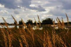 Vegetatie van een rivierlandschap Stock Foto