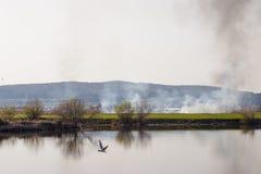Vegetatiebrand op kust 1 Stock Afbeelding