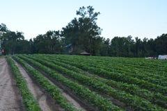 Vegetatieperiode Stock Foto's