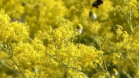 Vegetatieve achtergrond van bloeiend gras stock video
